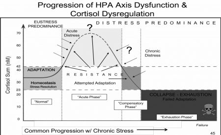 hpa-axis-dysfunction-and-stress-timeline